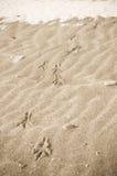 Pistes d'oiseau dans le sable de l'hiver Image libre de droits