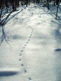 Pistes dans la neige Photo libre de droits