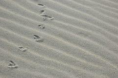 Pistes dans le sable Photo libre de droits