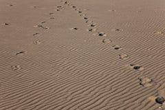 Pistes de cheval sur un fond d'ondes de sable Image stock