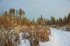 Pistes de forêt d'hiver images stock