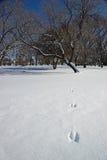 Pistes de lapin dans la neige Photographie stock libre de droits