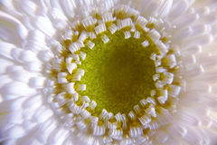 Pistil & Petals Royalty Free Stock Photography