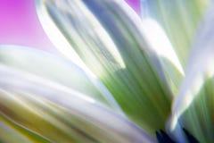 Pistil & Petals Royalty Free Stock Image