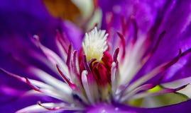 Pistilli e fiore Immagine Stock