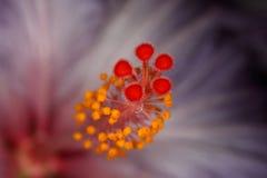 Pistilo de la flor fotografía de archivo