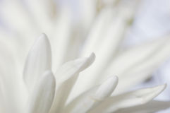 Pistils blandos Imagen de archivo