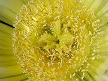 Pistils of a flower Stock Photo