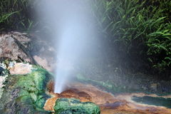 Piston of hot water splashing from the rock. Hot steam and water splashing out from the colourful rock in Waimangu volcanic valley Royalty Free Stock Image