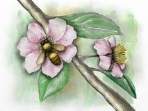 pisze kwiaty ja obrazu obrazka akwarela Zdjęcie Stock