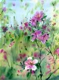 pisze kwiaty ja obrazu obrazka akwarela Obrazy Stock