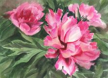 pisze kwiaty ja obrazu obrazka akwarela peonie Zdjęcie Stock