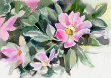 pisze kwiaty ja obrazu obrazka akwarela rose pies Obrazy Royalty Free
