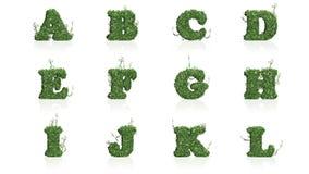 Pisze list A - L zieleni bluszczy liście z odbiciem Obraz Royalty Free