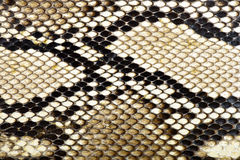 Pitón de la piel de serpiente Imagen de archivo libre de regalías