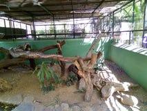 Pitón reticulado en el parque zoológico del katraj Fotografía de archivo libre de regalías