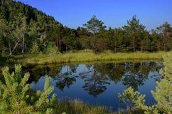 Pit bog Mohos Romanian Royalty Free Stock Photo