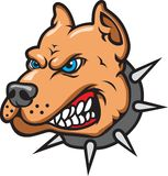 Pit Bull. This is a Pit Bull Mascot Stock Photo