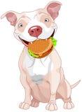 Pit Bull Dog Eats Hamburger Royalty-vrije Stock Foto