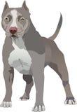 Pit Bull dog stock illustration