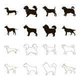 Pit bull, german shepherd, chow chow, schnauzer. Dog breeds set collection icons in black,outline style vector symbol. Stock illustration Stock Photography