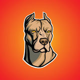Pit Bull Head. Cool vector Royalty Free Stock Photos