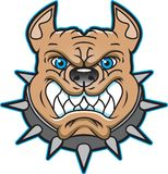 Pit Bull Image or Logo. This is a pit bull image or logo to be use as a team or club logo.  The blue outline can be remove, it is in a separate layer Royalty Free Stock Image