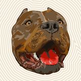 Pit bull portrait. Image for design covers,greeting cards,postcards,flyers Royalty Free Stock Photos