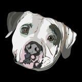 Pit Bull portret ilustracji