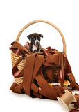 Pit bull puppy in basket of ribbons Royalty Free Stock Photography
