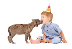 Pit bull puppy kisses the boy. In a celebratory cap Royalty Free Stock Photos