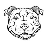 Pit bull portrait. Pit bull, smiling dog face, portrait, sketch, black and white vector illustration stock illustration