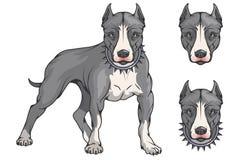 Pit bull terier, amerykański pit bull, zwierzę domowe logo, psi pitbull, barwiący zwierzęta domowe dla projekta, colour ilustracj ilustracja wektor