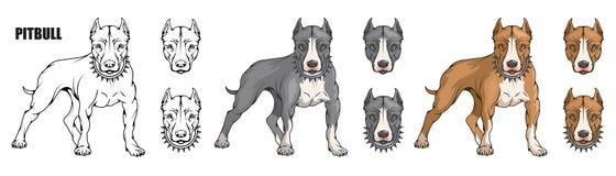 Pit bull terier, amerykański pit bull, zwierzę domowe logo, psi pitbull, barwiący zwierzęta domowe dla projekta, colour ilustracj royalty ilustracja