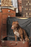 Dog in suitcase Stock Photos