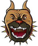 Pit bull Terrier head. Vector illustration of Pit bull Terrier head Royalty Free Stock Photo