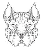 Pit bull terrier head zentangle, doodle stylized, vector, illust. Pit bull terrier head zentangle stylized, vector, illustration, freehand pencil, hand drawn Royalty Free Stock Photo