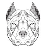 Pit bull terrier head zentangle stylized, vector, illustration. Freehand pencil, hand drawn, pattern. Zen art. Ornate vector. Lace. Print for t-shirts Royalty Free Stock Images