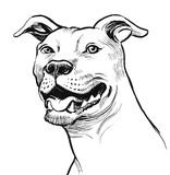 Pit bull terrier. Ink drawing of a pit bull terrier Royalty Free Stock Image