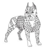 Pit bull terrier zentangle stylized, vector, illustration, freeh. And pencil, hand drawn, pattern. Zen art. Ornate vector. Lace. print for coloring books and t Royalty Free Stock Photography