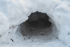 Pit in the snow. A hige pit in snow in the forest Stock Photos