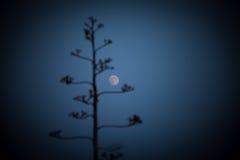 Pitabröd med månen Arkivfoto