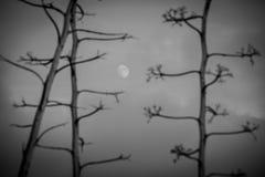 Pitabröd med månen II Royaltyfri Fotografi