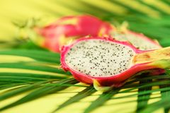Pitahaya or dragon fruit over tropical green palm leaves on yellow background. Top view with copy space. Pop art design, creative. Summer concept royalty free stock image