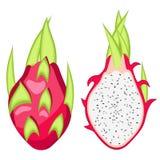 Pitahaya, Dragon fruit vector Illustration. Exotic fruit. Cartoon style Stock Image