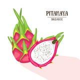 Pitahaya orgânico dos desenhos animados Ilustração do vetor Dragonfruit isolou-se no fundo branco Foto de Stock Royalty Free