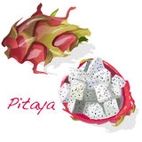Pitaya或龙果子 向量 免版税图库摄影