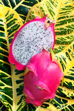 Pitaya also Dragon Fruit Stock Image