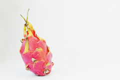 Pitaya de fruit ou pitahaya exotique, undatu de Hylocereus de fruit du dragon Image libre de droits