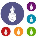 Pitaya, dragon fruit icons set. In flat circle reb, blue and green color for web Stock Images